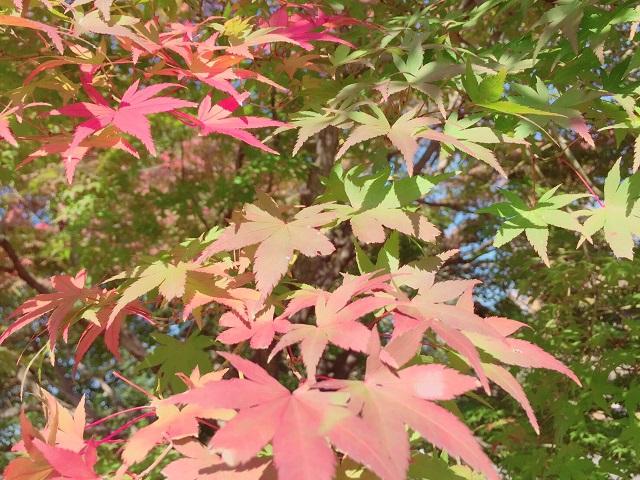紅葉.jpg2
